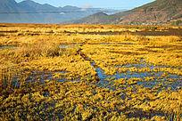 草原湿地沼泽荒草丛生