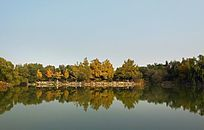 丛林湖泊倒影
