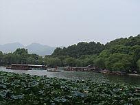 西湖荷花池