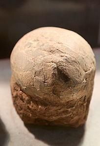 晚白垩世树枝蛋化石