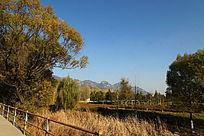 秋天的湿地公园风光