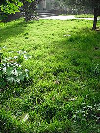 阳光下发光的草地
