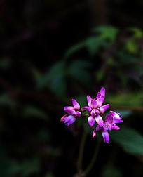 粉色的小野花