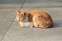 黄色小猫咪