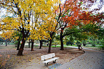 金黄树枝下的木椅