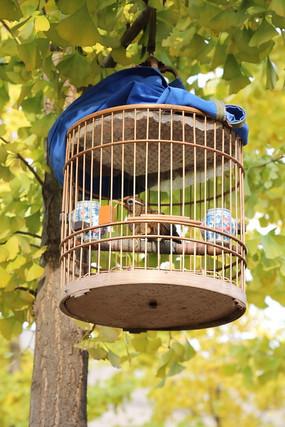 笼子里的小鸟