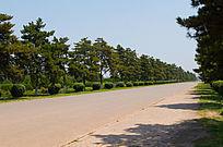 马路两旁的树木