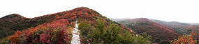 满山红叶风景摄影