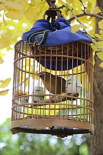 树枝上的鸟笼