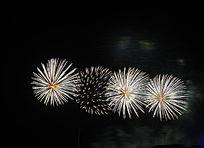 燃放球形花