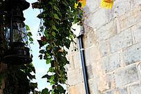 垂下墙的藤蔓