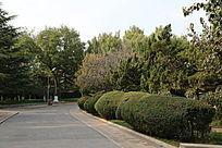 龙潭公园绿化景观
