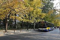 秋天里的公交车