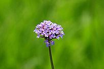 小花朵背景