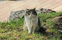 坐立的小花猫