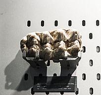 北京周口店中国菜狗牙齿