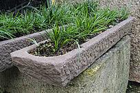 长条石槽绿色植物