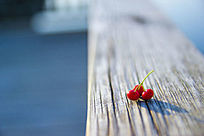 红色小野果图片素材
