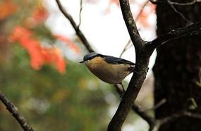 枝干上的一只小鸟