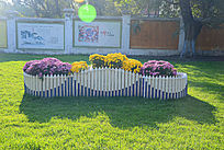 彩色花卉盆栽