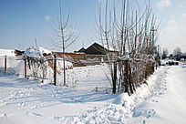 大雪后的树枝