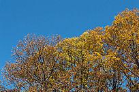 泛黄的树枝