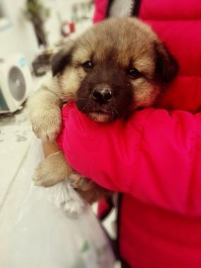 抱着的小狗
