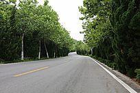 绿树成荫的公路