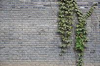 绿叶青砖墙背景
