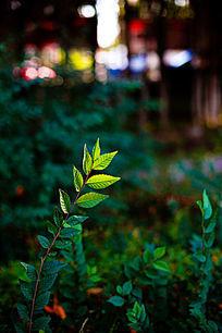 一缕阳光洒在叶子上
