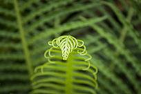 翠绿的蕨类植物