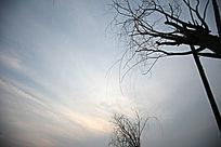 天空与树枝