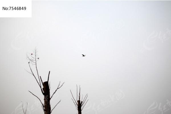 归家的鸟图片