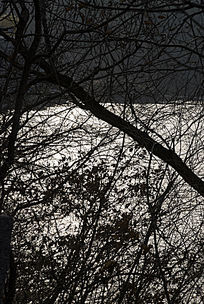 逆光下的树枝