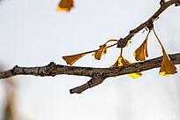 树枝上的黄叶子