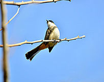 树枝上张望的小鸟