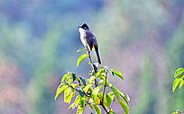 站立在树枝上的鸟儿