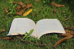 草地上的书