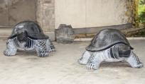 两只爬行的乌龟