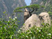 高山绿树风景图片