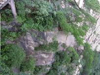 高山绿树风景图图片