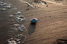 金色沙滩上的贝壳