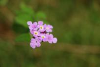 紫色小花朵