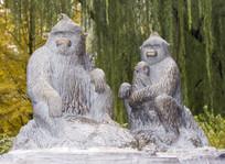 一家三口黑猩猩