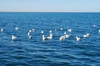 湖泊与海鸥