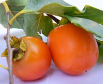 绿色食品野生柿子