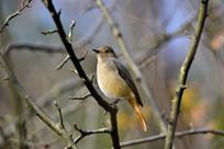 栖栖在树枝中的 小鸟儿