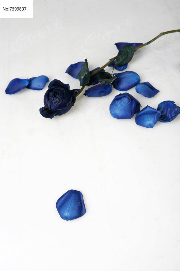 蓝色的花图片