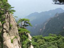 上风树木风景图