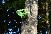 树干上的绿色叶子